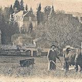 1900-Laboureur-La-Vigne-II.jpg