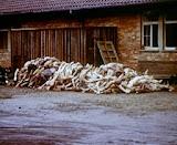 Olocausto - 07.jpg