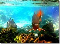Aquario-natural-bonito-ms