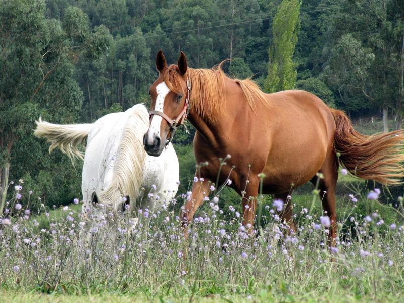 Ganador Floro -  Titulo : Rico pasto