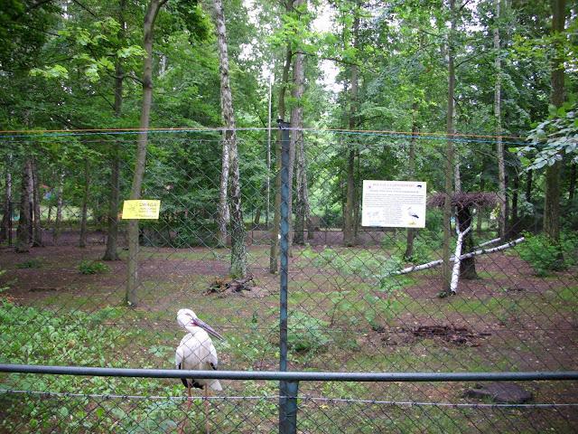 Bociany czarnodziobe przeprowadziły się ze Starego Zoo do Nowego Zoo
