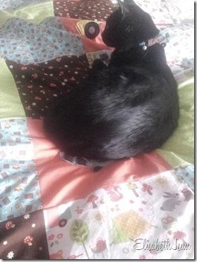 duncan (quilt cat)