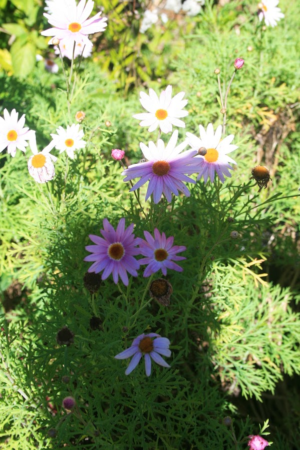 Un petit air de printemps... IMG_3853