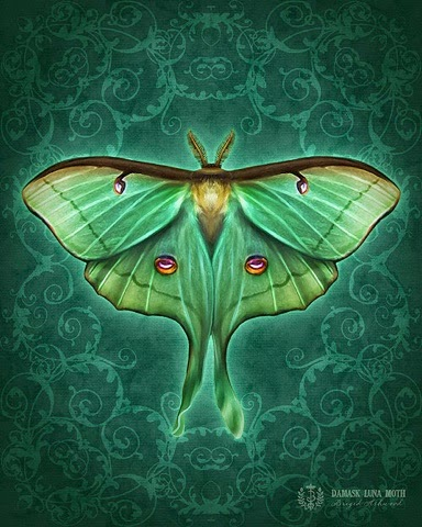 Enchanting Babble Spirit Power Animal Totem Moth