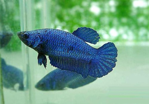 betta-fish-5-gallon-fish-tank-(34)