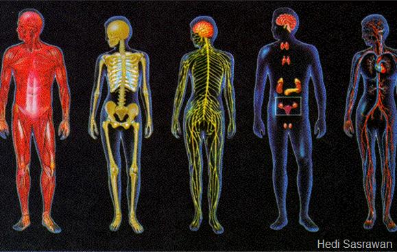 Macam-macam sistem organ pada manusia
