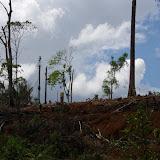 Dévastation (imbécile) sur Pointe Maripa (Rivière Comté), 9 novembre 2012. Photo : J.-M. Gayman