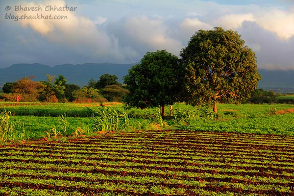 Beautiful farmscape near Saswad