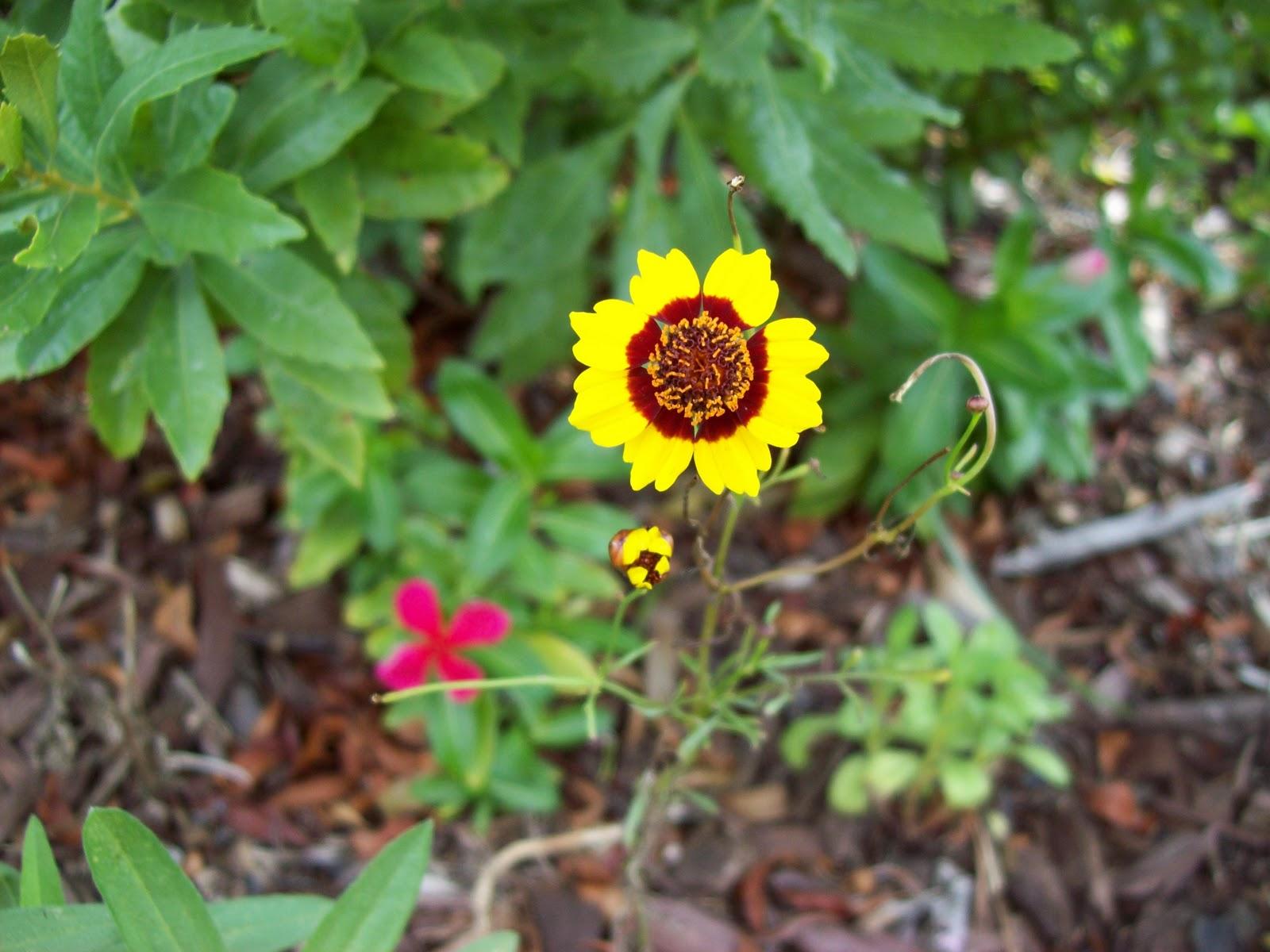 Gardening 2009 - 101_4791.JPG