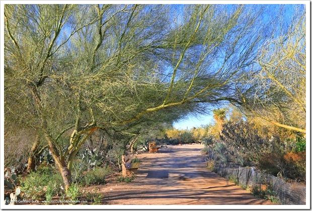 151230_Tucson_Tohono-Chul-Park_0053