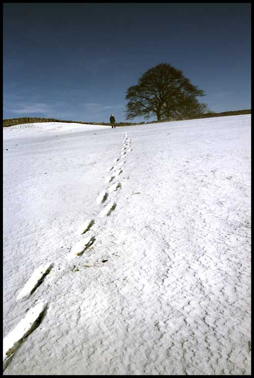 Footsteps-in-Snow