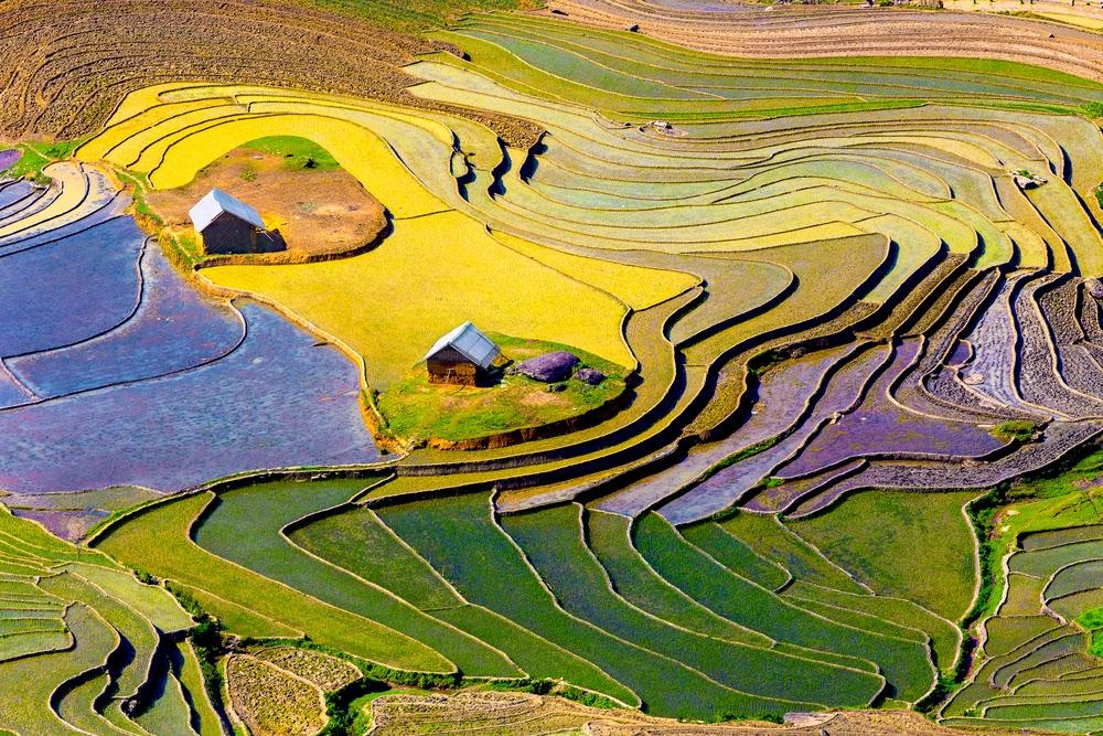 Terraced Rice Field, Lao Cai Province, Vietnam