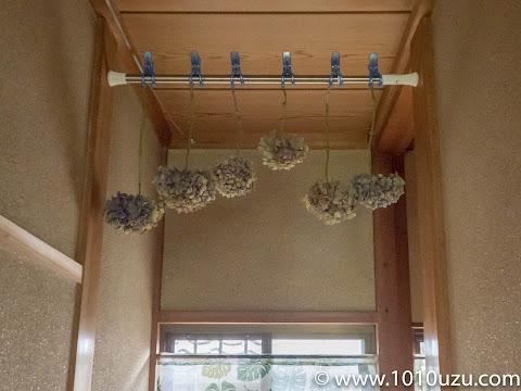 廊下の風通しがよい所に吊るしドライフラワーにする