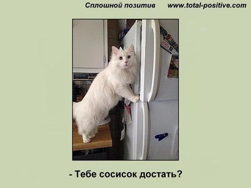 Белая кошка у открытого холодильника