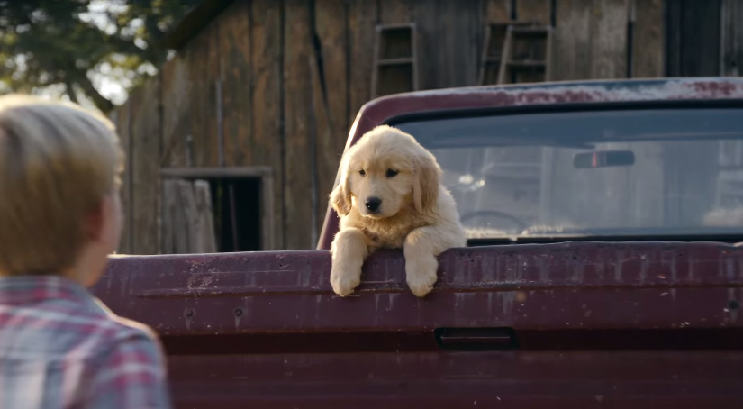 "First Bank's Super Bowl ""Puppy Sale"" Ad Does Not End Well For This Sweet Boy or Does It?"