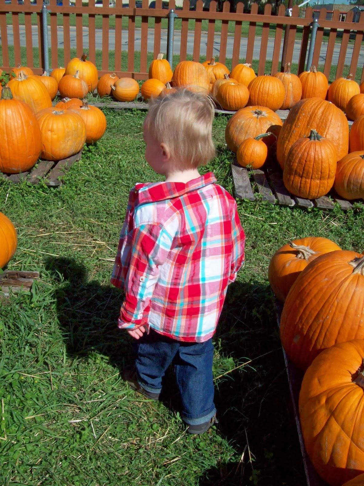Pumpkin Patch - 114_6569.JPG