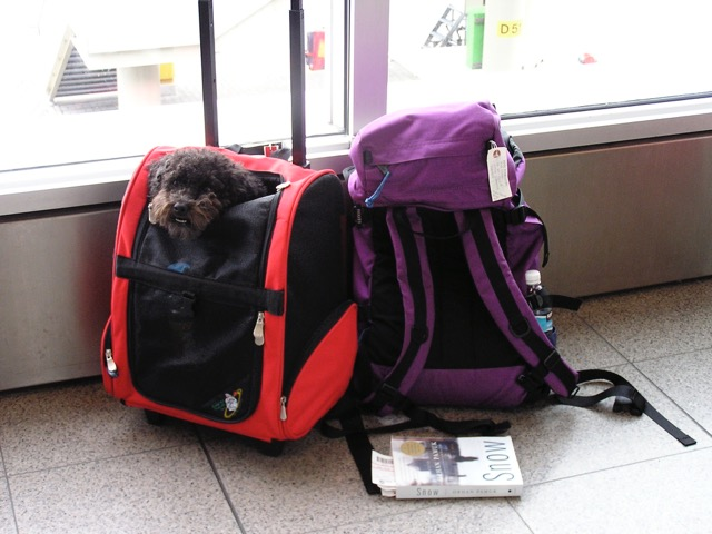 Ann Marie's sidekick, Libby, patiently waits for their next flight in Amsterdam. Ready to be an Expat? A life overseas is within your grasp.