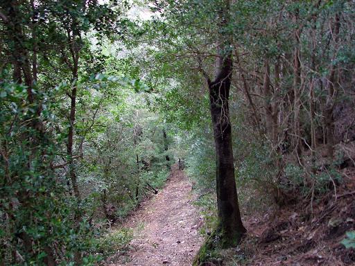 Senderismo: Àrea de la Fou - Cova dels Angels - Cova Roja - Pont Foradat