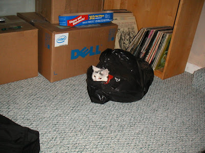 Garbage sprouting a cat head