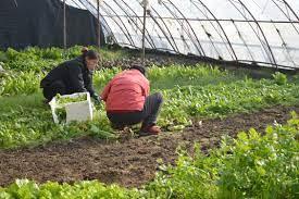 5 Supplies needed to start a vegetable garden