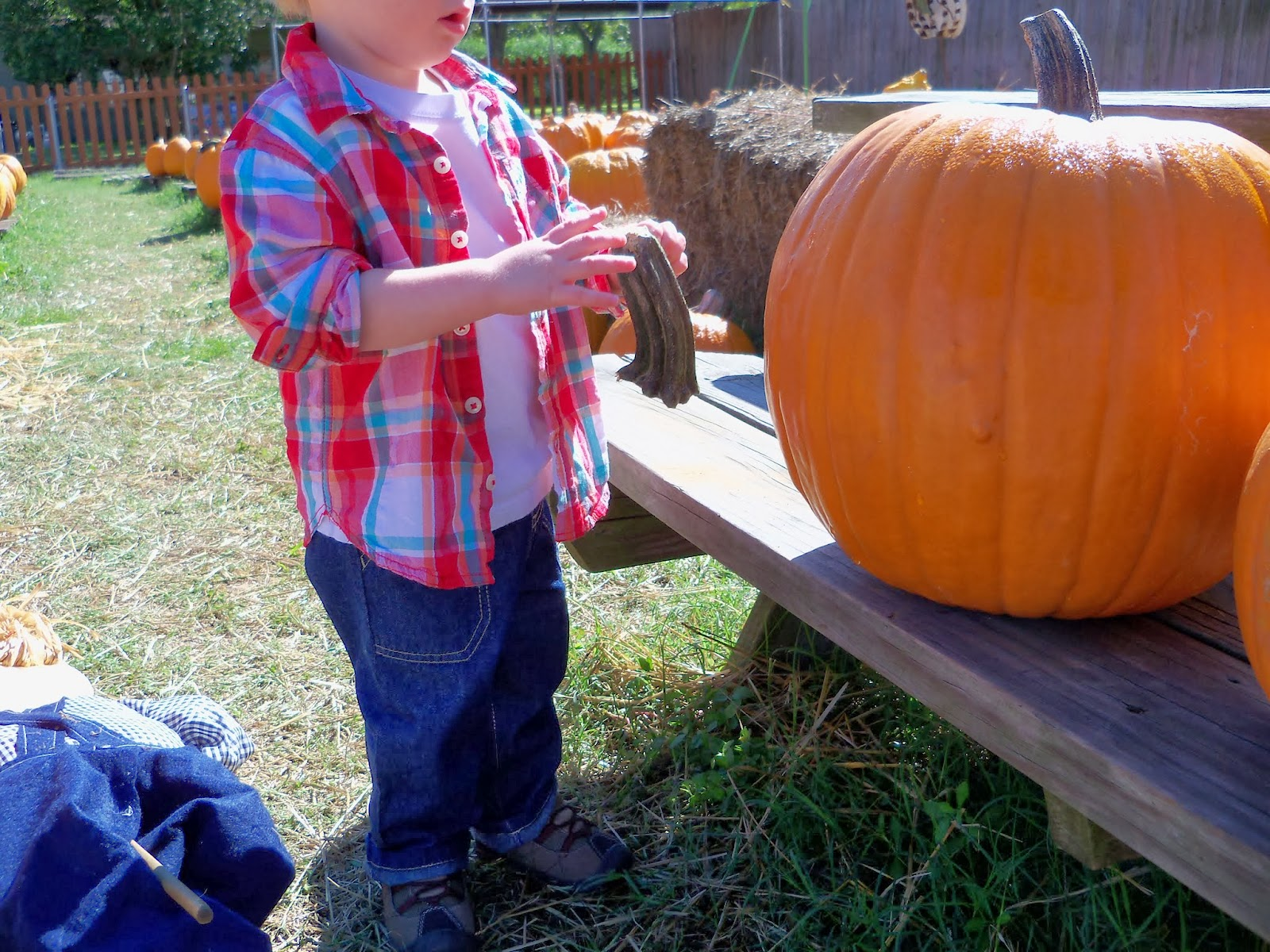 Pumpkin Patch - 115_8226.JPG
