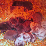 Saffy's babies @ 1 week