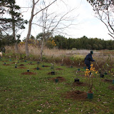 Hammo Fall Planting - Jim Murtagh - BC3G2544.jpg