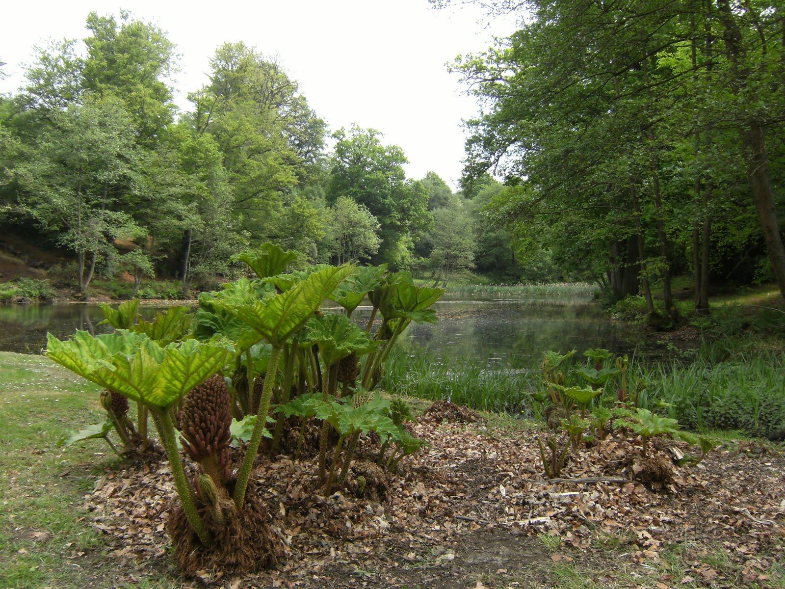 DSCF7812 Lake on the Buckhurst Estate