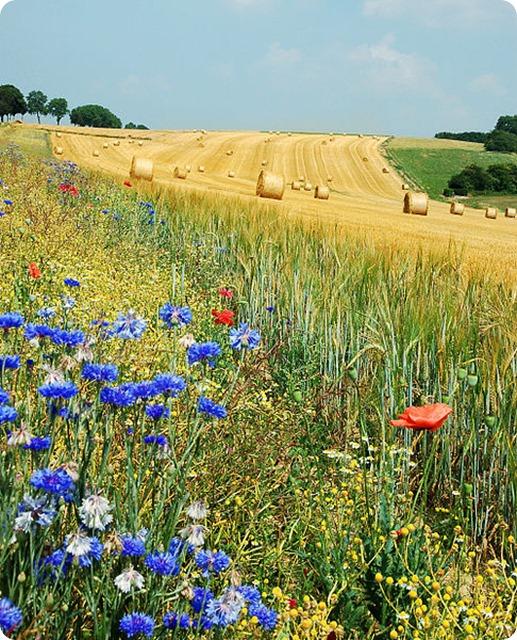 Biodiversity-Field_Hamois_Belgium_Luc_Viatour