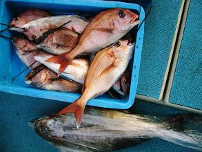 Photo: トータル真鯛12枚とメダイ、オナガでした!