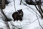 2010/02/21 八木の泉上斜面ビッグママとアカの母子 2/2 目の周りがしっかりと黒くなり、旅立ちの時期が迫っていることをつげる。 去年の今頃のニャンニャンに瓜二つだ。