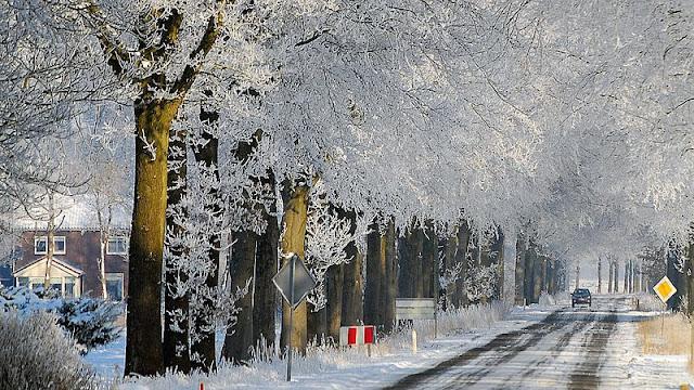 Winterkiekjes Servicetv - Ingezonden%2Bwinterfoto%2527s%2B2011-2012_48.jpg