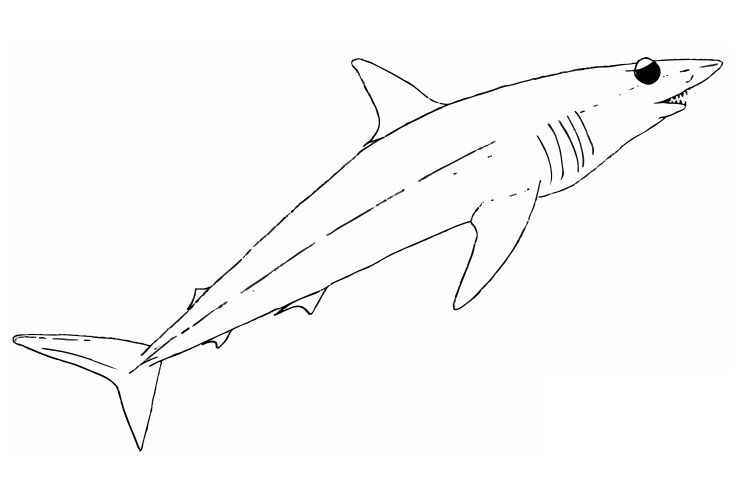 Geography Blog Shortfin Mako Shark Coloring Page Mako Shark Coloring Page