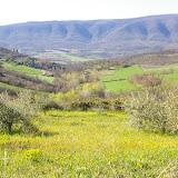 Les Hautes-Courennes. Vue vers le Sud : oliviers, vallon de Fouix, vallée du Calavon et Grand Lubéron. Mai 2005. Photo : J.-M. Gayman