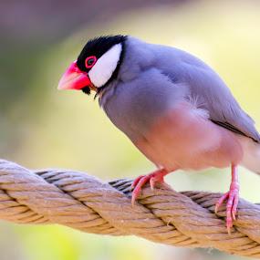 Awesome bird by Amanda Blom - Animals Birds ( bird, nature, animal,  )
