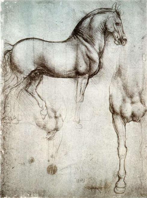 Studio di cavalli