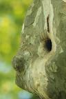 VISAGE D'ENFANT  Et accessoirement nid d'étourneaux !
