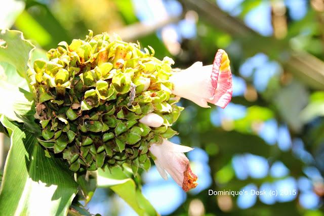 A ginger flower