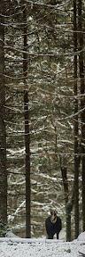 SOUS COUVERT D'HIVER  Rencontre avec un chamois dans une pessière du haut-Jura (Novembre 2013)