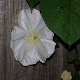 Gardening 2011 - 100_8773.JPG