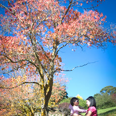 2011 04 25 Mt Lofty Botanic Garden - IMG_6410.jpg