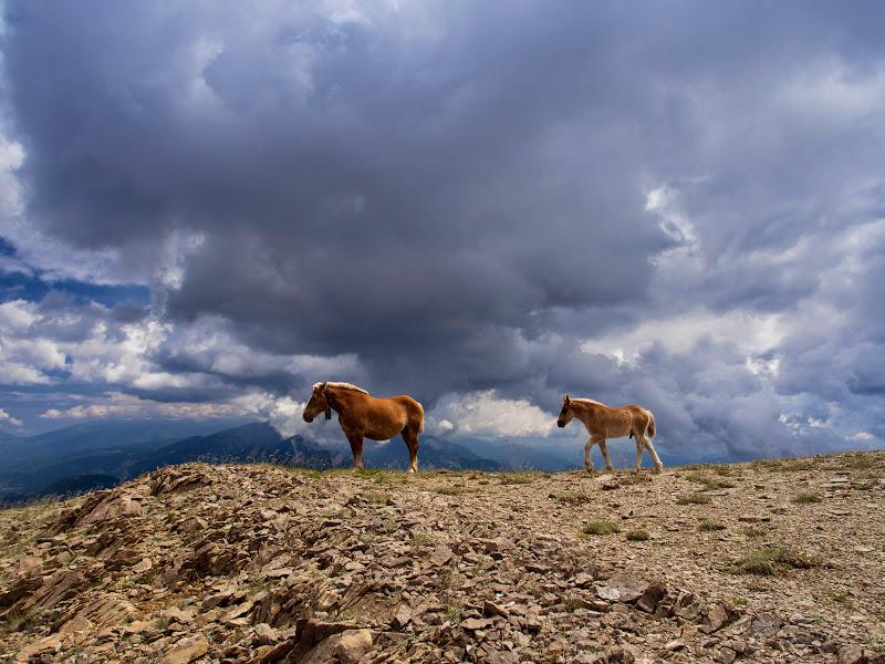 Cavalls prop del cim