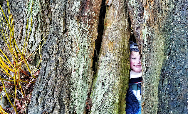 cheeky boy hiding in a hollow tree