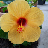 Gardening 2010 - 101_1593.JPG