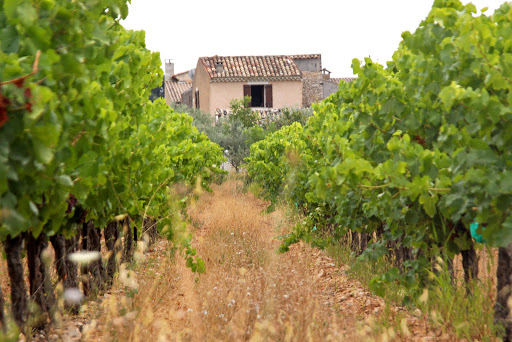 Wine for Life - Getting the Most Out of a Wine Tour and Learning How to Make Wine