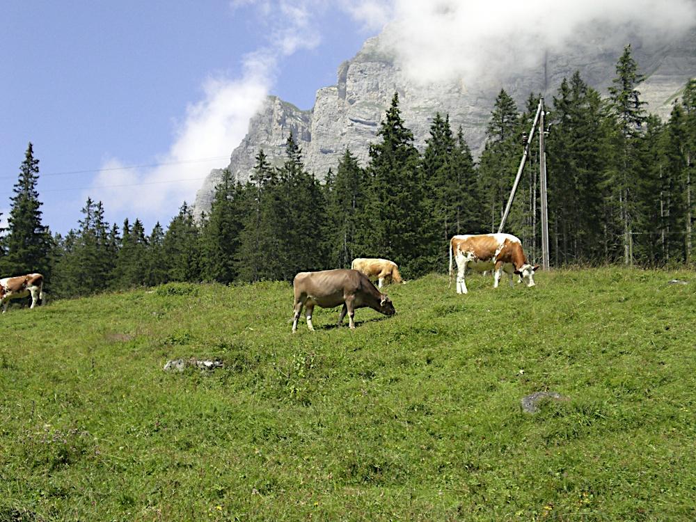 Campaments a Suïssa (Kandersteg) 2009 - CIMG4660.JPG