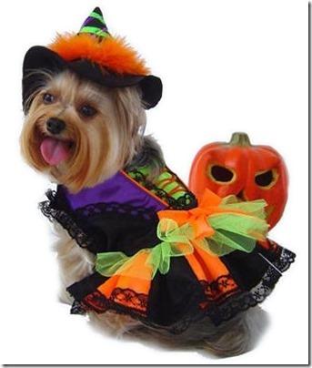 disfraces divertidos para perros  (9)