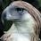 Sangstar1 Videos Presentations TruthResearchers's profile photo
