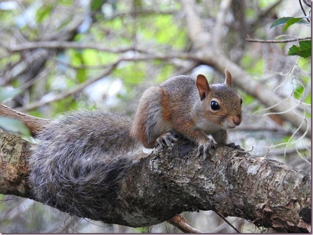 squirrelRDSCN1096