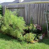 Gardening 2010, Part Three - 101_4990.JPG